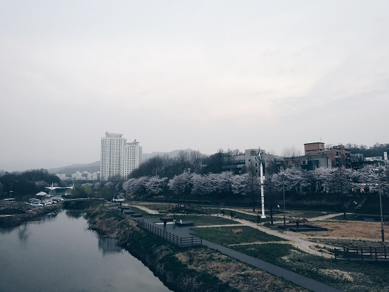 자전거 타고 양재천, 서울숲 벚꽃 구경