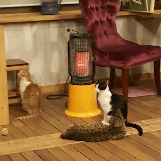 고양이카페의 고양이+길냥이