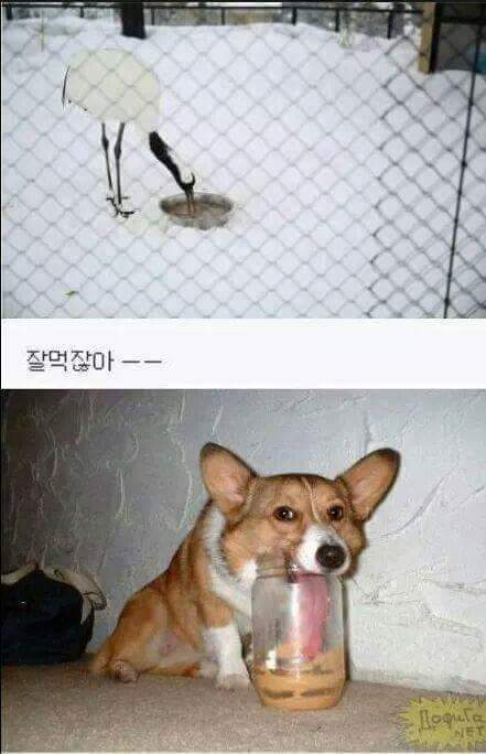 여우와두루미동화가 구라인 이유!!