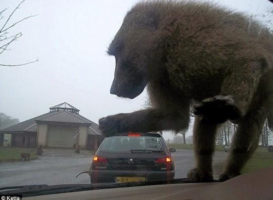 변종원숭이의 습격!!!