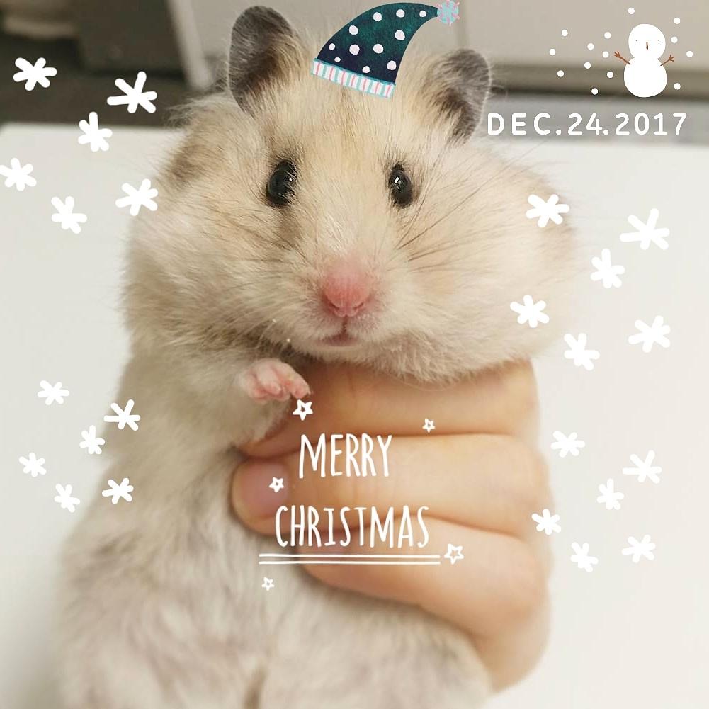 핑구의 크리스마스이브