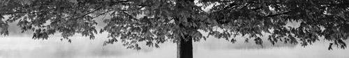 """""""큰 나무 아래에는 풀도 자라지 않지"""""""
