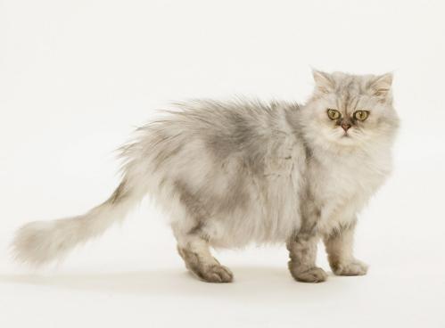 고양이의 행동으로 화산 폭발을 안다