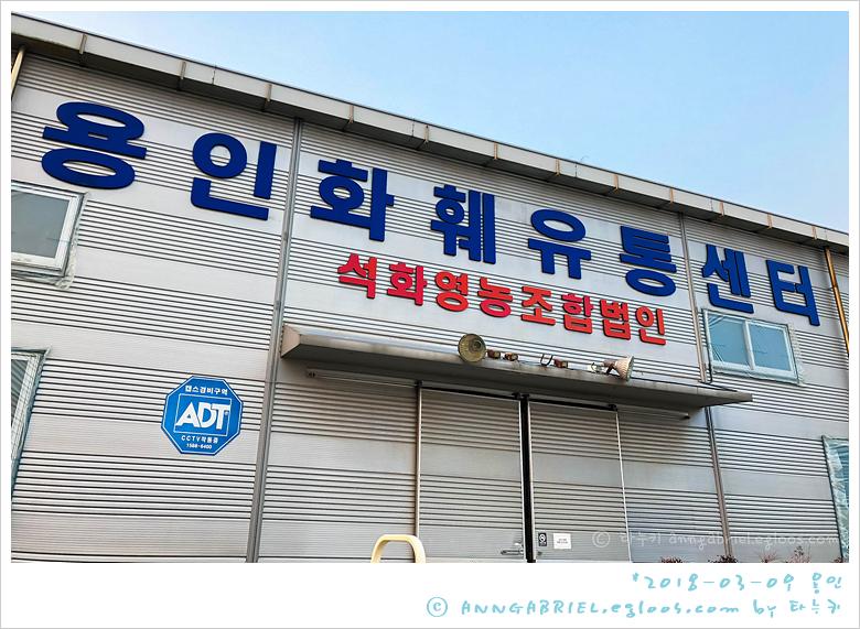 [용인] 봄꽃 구경, 석화 화훼유통센터