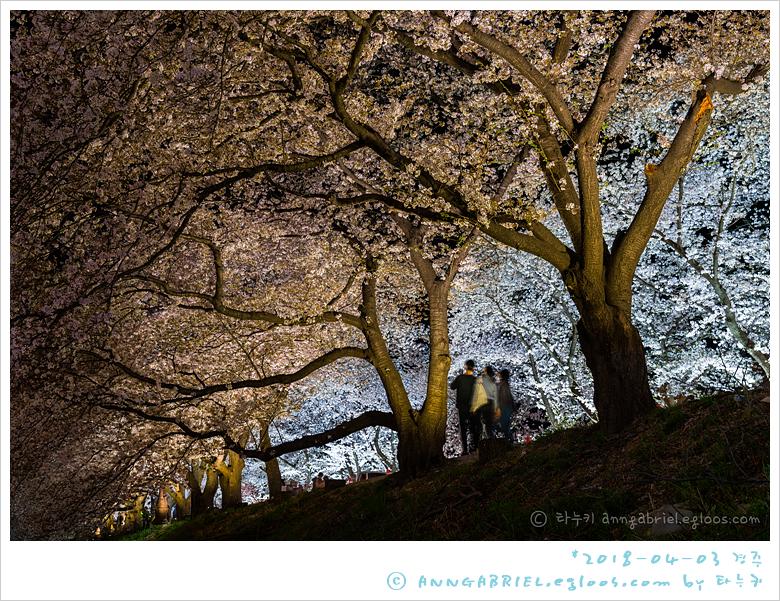 [경주] 만개한 흥무로 벚꽃길 야경, 김유신장군묘