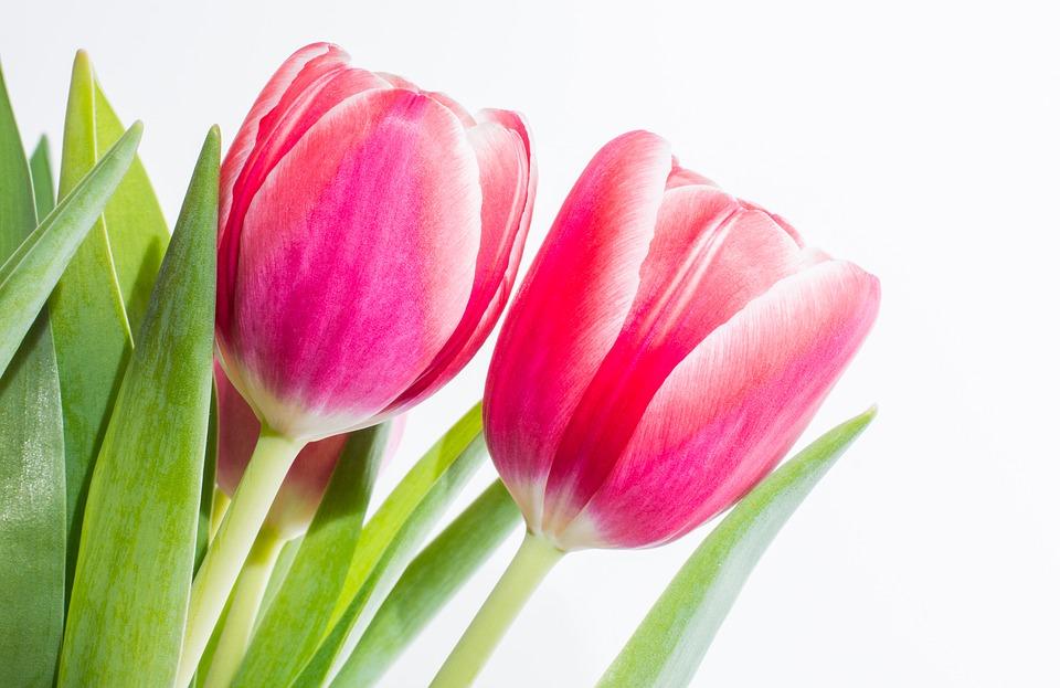 봄날, 벚꽃 그리고 당신