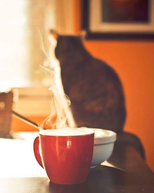 너는 책을 왜 읽니? _책을 지키려는 고양이