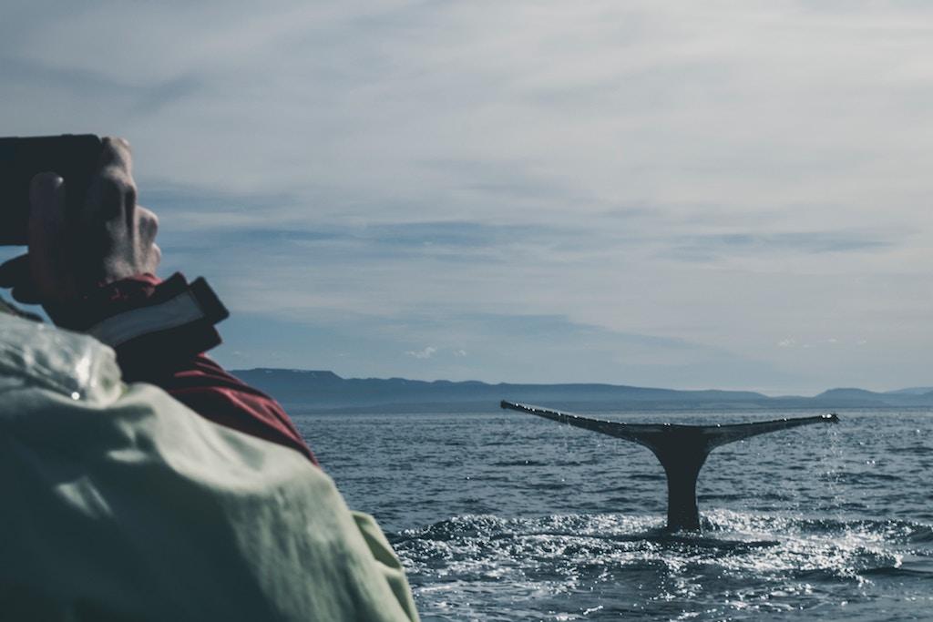 소설 '고래'의 주인공은 누구인가?