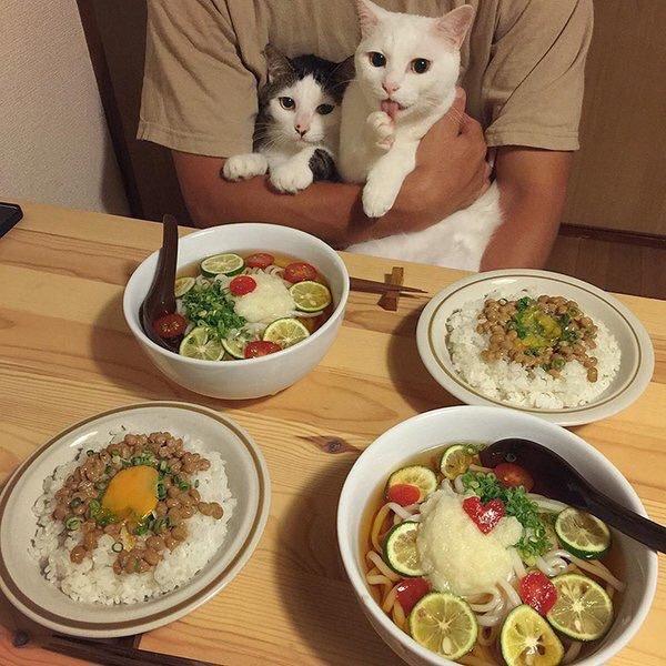 냥이들의 식사 호불호