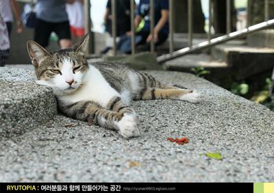 2018.10.9. (39) 심쿵주의! 허우통(猴硐) 고양이..