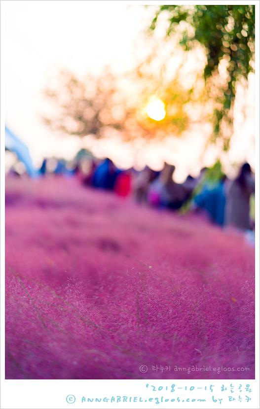 [상암 하늘공원] 핑크뮬리 홀릭