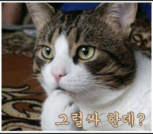 철심장의 언론모니터링(1)- kbs뉴스의 어용논평..