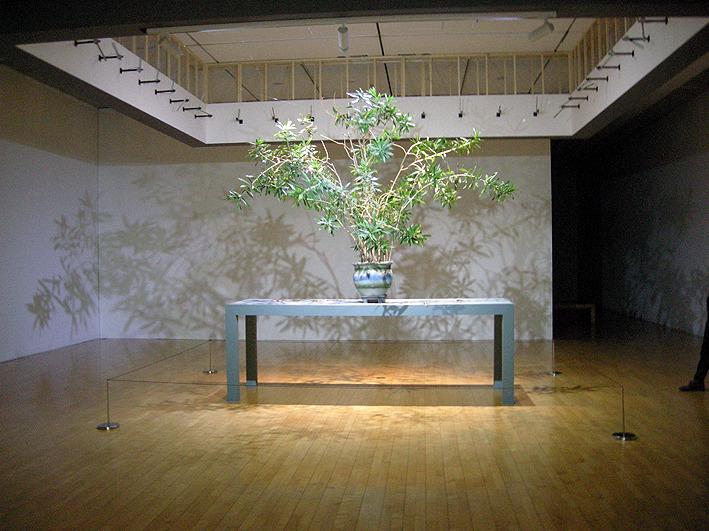 촹 치웨이 Reborn Tree Series