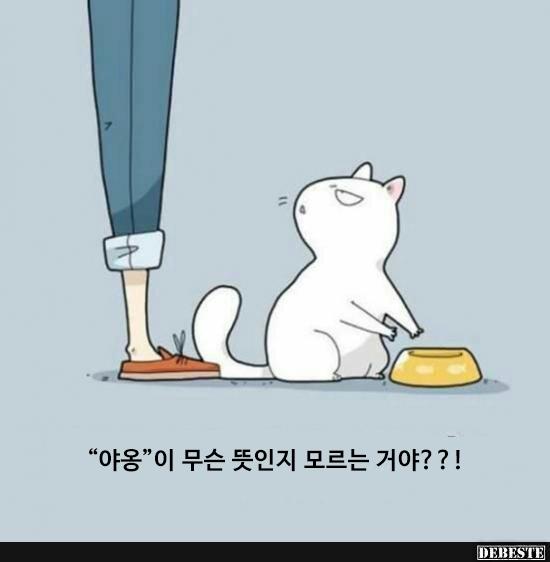 [번역] 집사는 내 맘도 몰라?