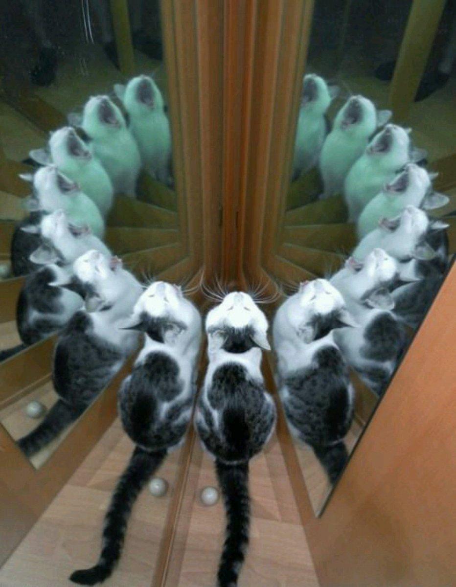 캣툴루 소환 의식.jpg