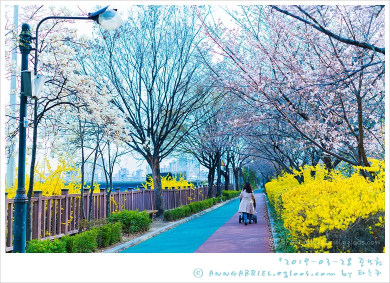 [중랑천] 미리 가 본 동대문 봄꽃축제 - 1