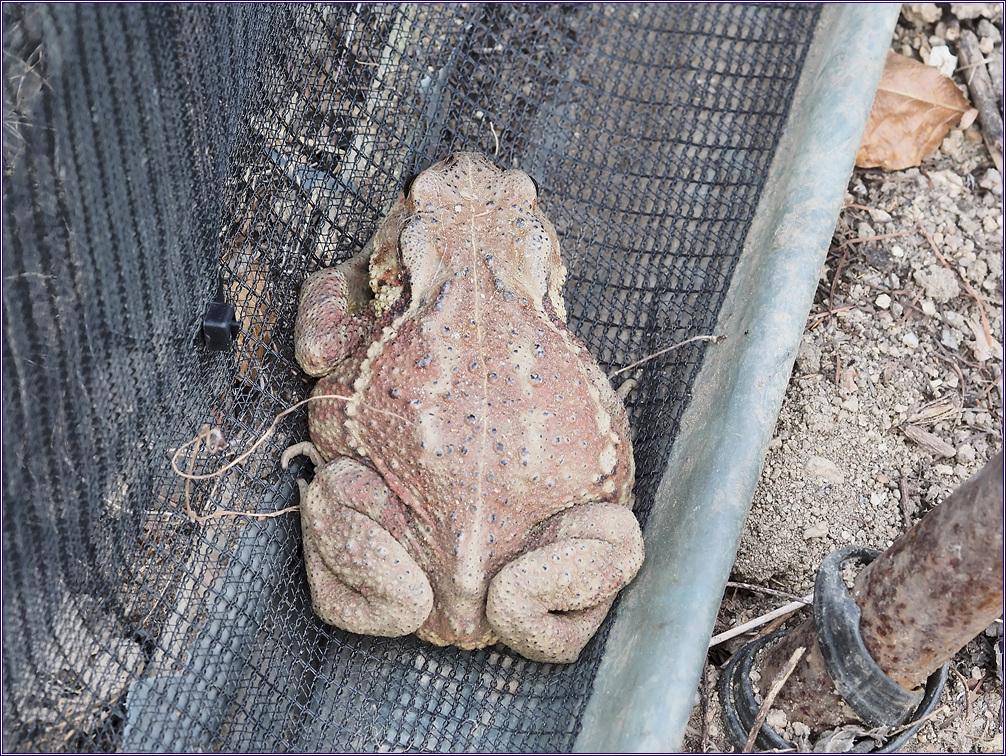 두꺼비를 만나다.